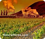 Environmental-Toxins-Crops