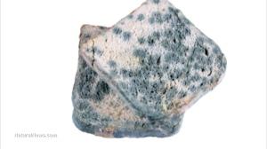 Toast-Bread-Moldy