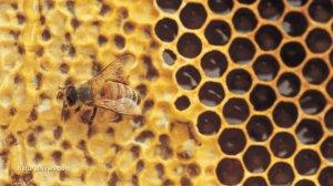 Bee-On-Honeycomb